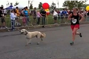 Dog Runs Marathon